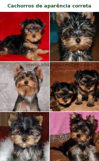cachorros-corretos.jpg (400×650)